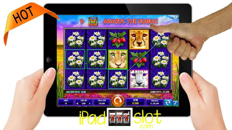 Cat Paws Slots Machine by IGT Game Review
